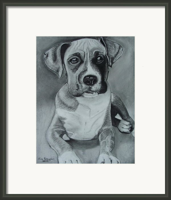 Baxter Framed Print By Kim Shayler