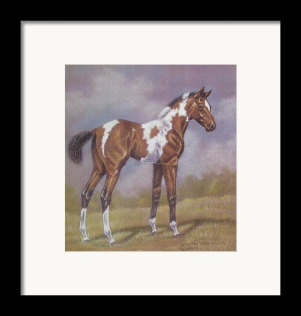 Bay Paint Foal Framed Print By Dorothy Coatsworth