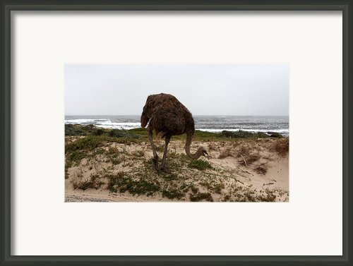 Beach Bird Framed Print By Aidan Moran