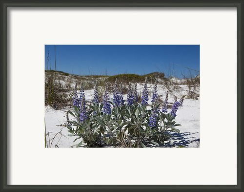 Beach Flora Framed Print By Charles Warren