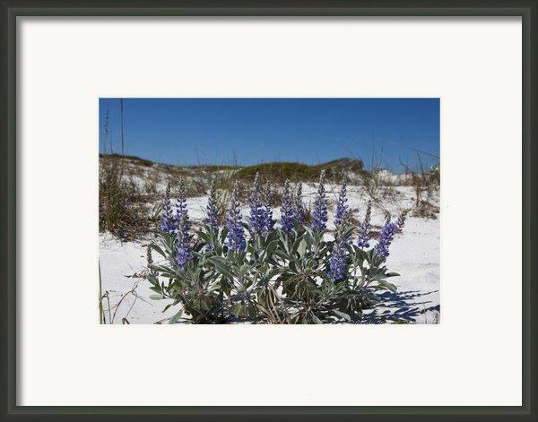 Beach Flora Framed Print By Charles Warren