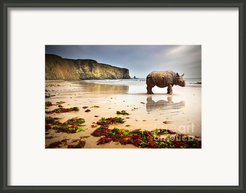 Beach Rhino Framed Print By Carlos Caetano