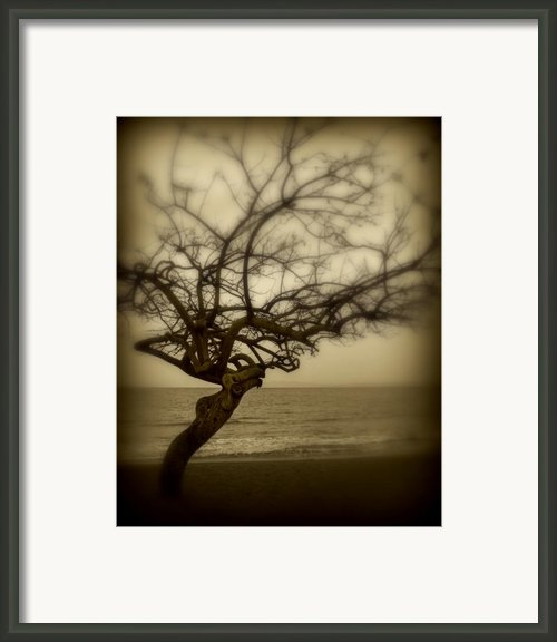 Beach Tree Framed Print By Perry Webster