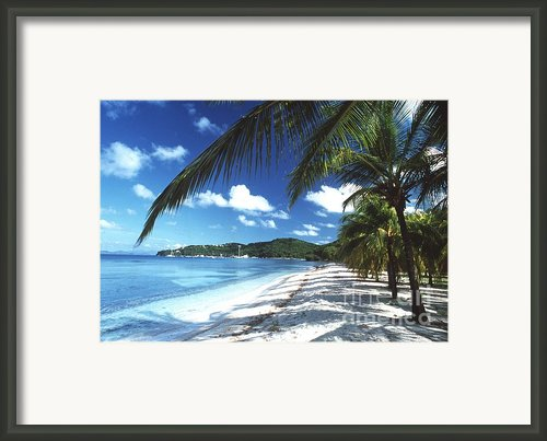 Beach With Palm Trees Framed Print By Peter Falkner And Photo Researchers