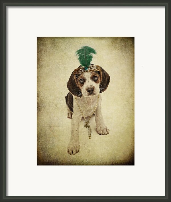 Beagle Puppy Flapper  Framed Print By Susan  Schmitz