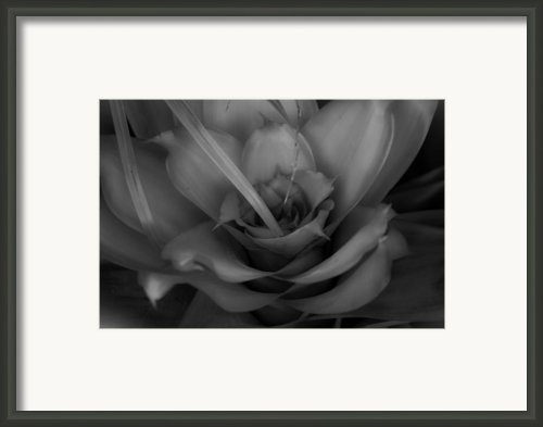 Beautiful Bromeliad Framed Print By Christine Tyson