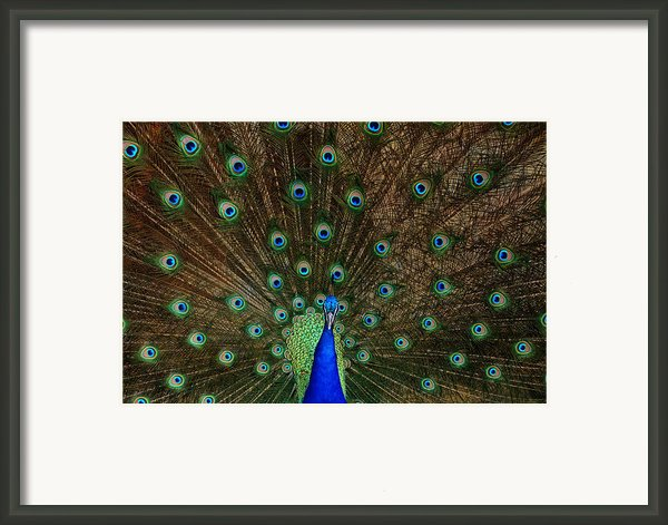Beautiful Peacock Framed Print By Larry Marshall