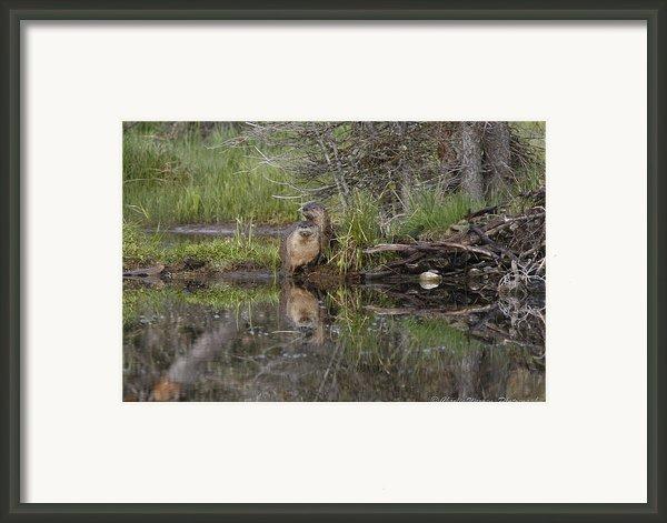 Beaver Pair Framed Print By Charles Warren