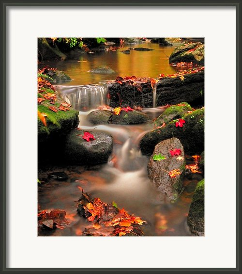 Bee Brook-gentle Autumn Cascade Framed Print By Thomas Schoeller