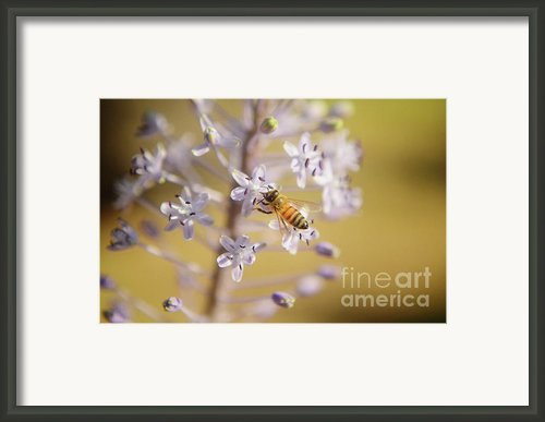 Bee Collects Necta 3 Framed Print By Benny  Woodoo