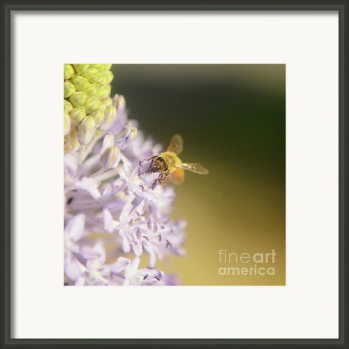 Bee Collects Nectar 4 Framed Print By Benny  Woodoo