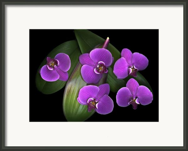 Bees On Green Framed Print By Christian Slanec