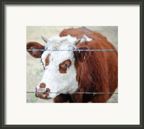 Behind Barbs Framed Print By Lisa Moore