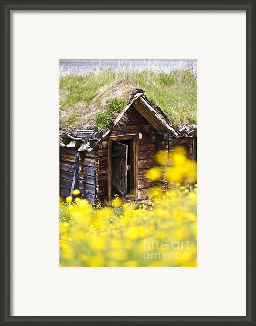 Behind Yellow Flowers Framed Print By Heiko Koehrer-wagner