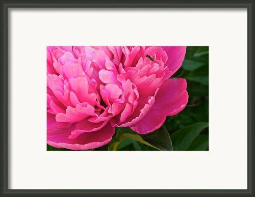 Behold The Beauty Framed Print By Robert Harmon