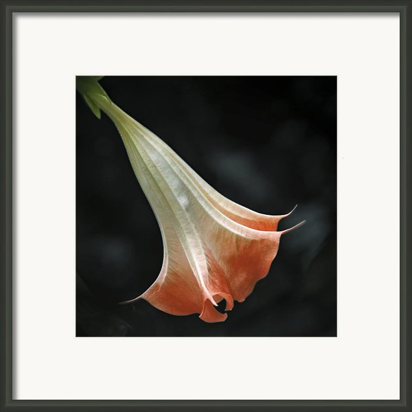 Bella Donna Framed Print By Katherine Morgan