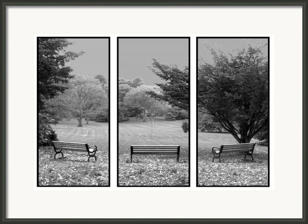 Bench View Triptic Framed Print By Tom Romeo