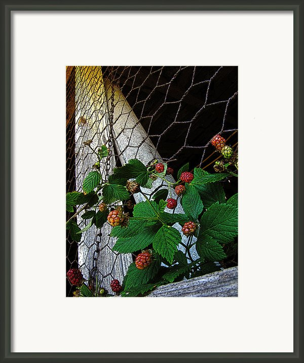 Berries Framed Print By Jessica Brawley
