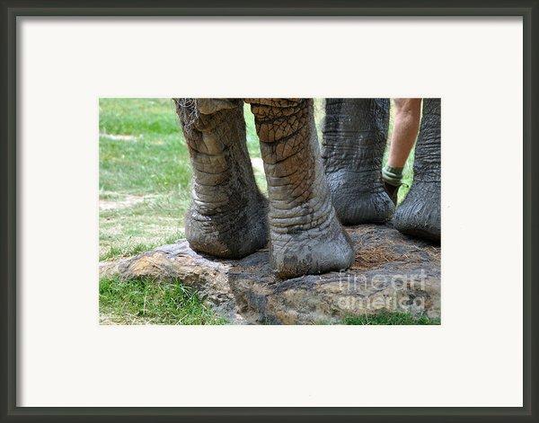 Best Foot Forward Framed Print By Joanne Kocwin