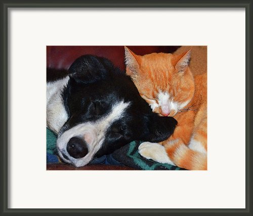 Best Friends Framed Print By Susie Fisher