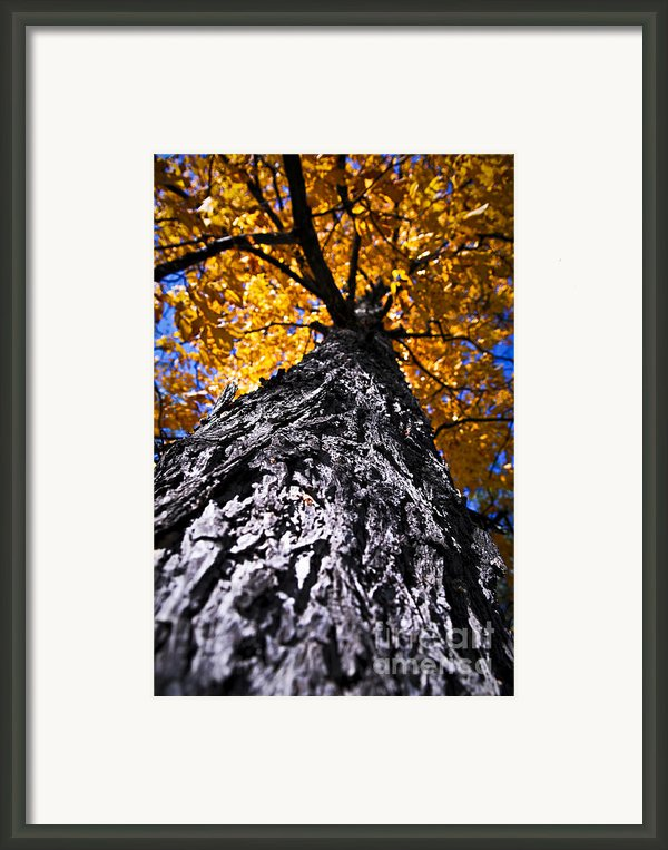 Big Autumn Tree In Fall Park Framed Print By Elena Elisseeva