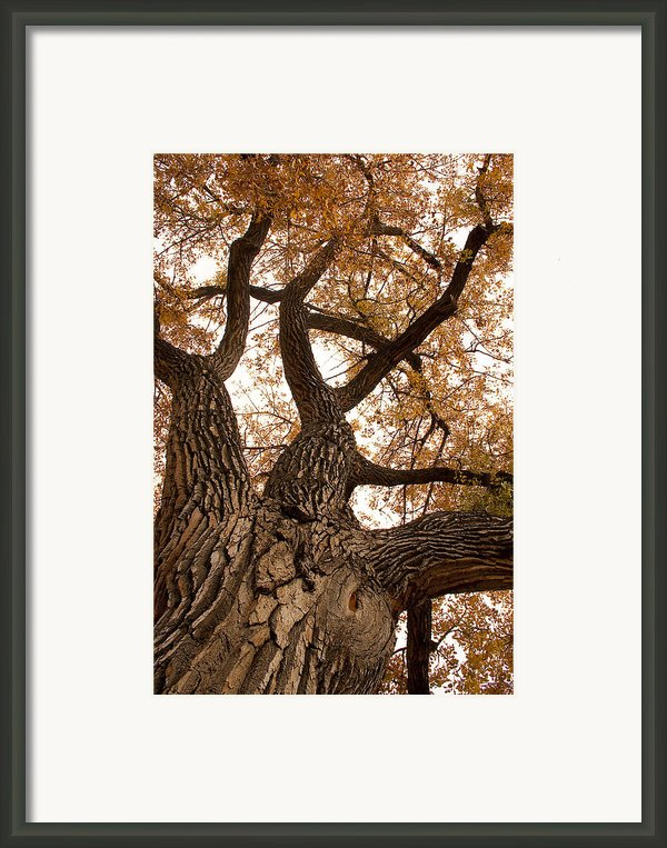 Big Tree Framed Print By James Bo Insogna