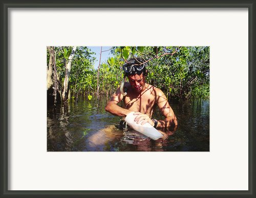 Biological Field Research Framed Print By Alexis Rosenfeld
