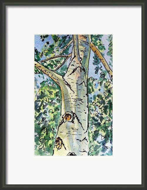 Birch Tree Sketchbook Project Down My Street Framed Print By Irina Sztukowski