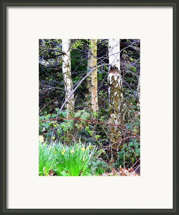 Birch Trees In London Framed Print By Mindy Newman