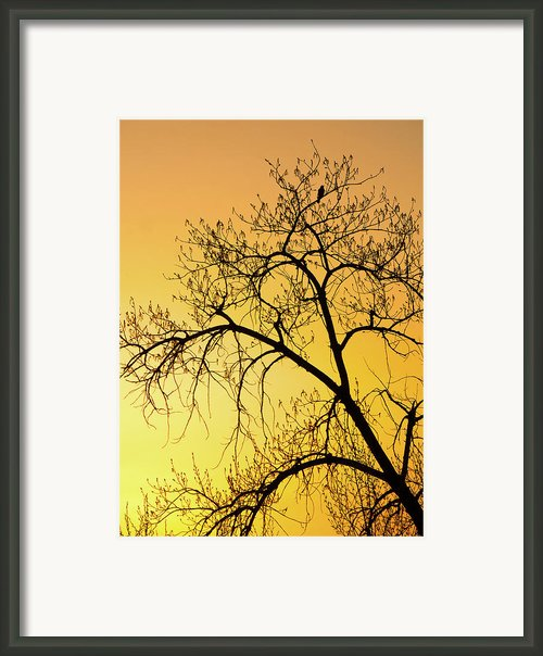 Bird At Sunset Framed Print By James Steele