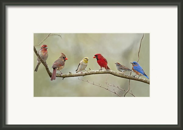 Bird Congregation Framed Print By Bonnie Barry