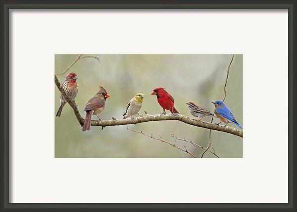 Bird Congregation Framed Print By Bonnie Barry