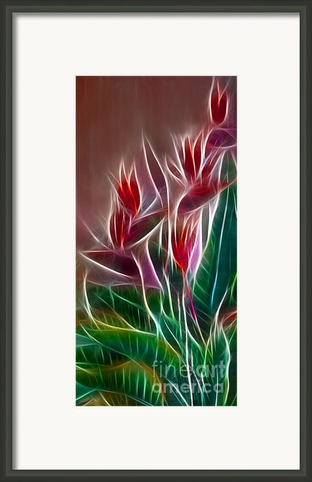 Bird Of Paradise Fractal Framed Print By Peter Piatt