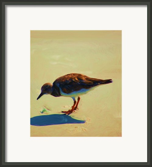 Bird On Daytona Beach Framed Print By David Lane