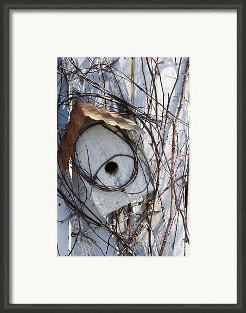 Birdhouse Brambles Framed Print By Lauri Novak