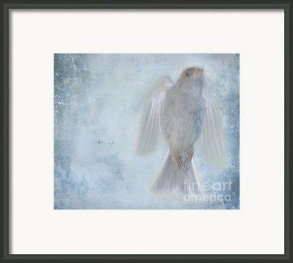 Birdness Framed Print By Jim Wright