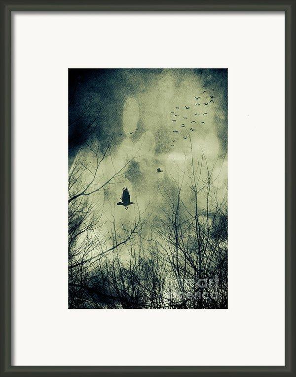 Birds In Flight Against A Dark Sky Framed Print By Sandra Cunningham