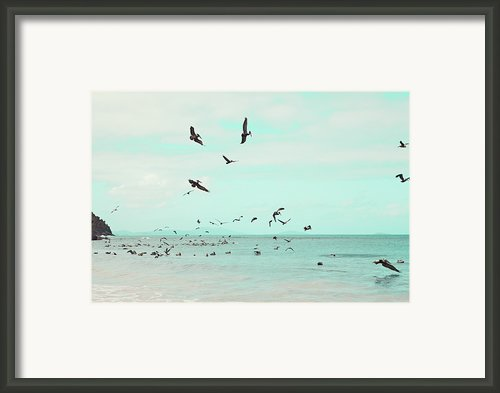 Birds In Flight Framed Print By Kim Fearheiley Photography