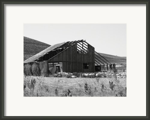 Birds Landing Barn Framed Print By Troy Montemayor