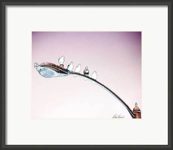 Birds On A Streetlight Framed Print By Diana Haronis
