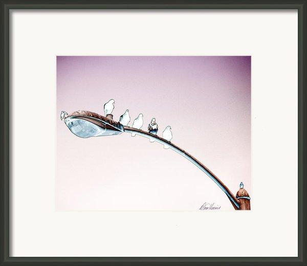 Birds On A Streetlight Framed Print By Diana Haronis