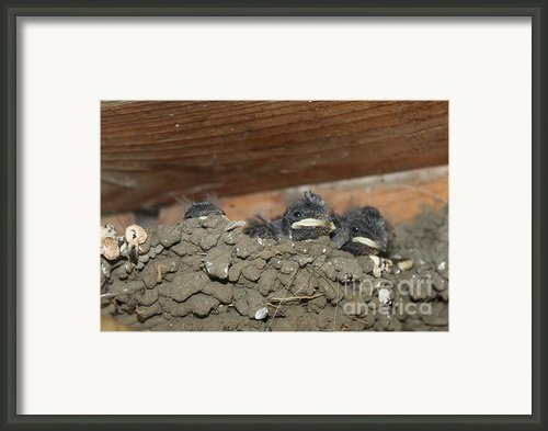 Birds  Picture Framed Print By Preda Bianca