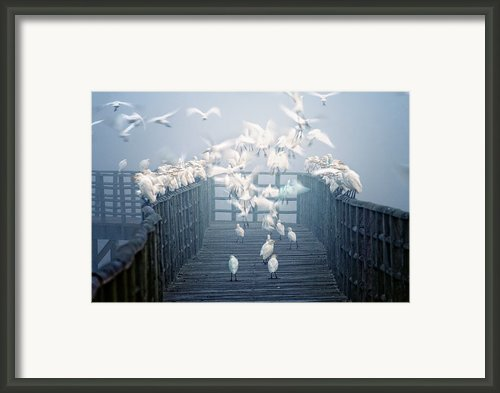 Birds Framed Print By Zu Sanchez Photography