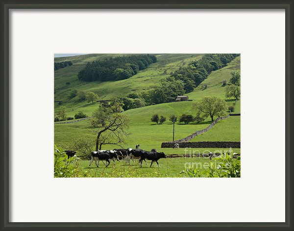 Bishopdale In The Yorkshire Dales National Park Framed Print By Louise Heusinkveld