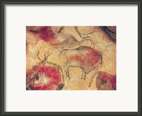 Bisons From The Caves At Altamira Framed Print By Prehistoric