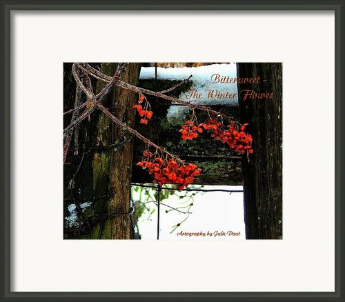 Bittersweet The Winter Flower Framed Print By Julie Dant