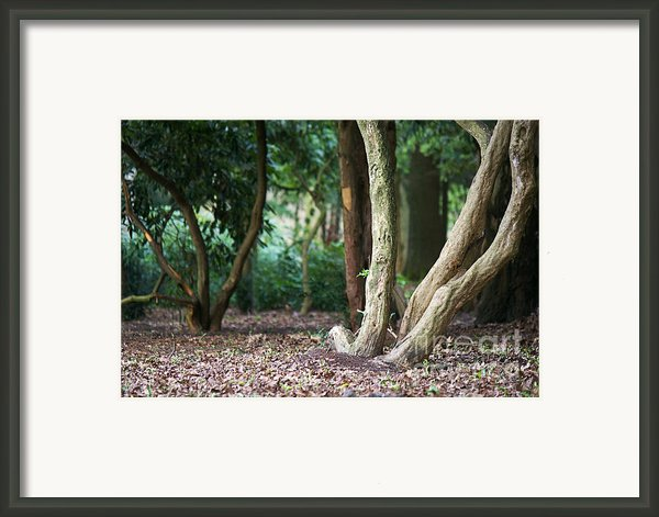 Bizarre Trees Framed Print By Angela Doelling Ad Design Photo And Photoart
