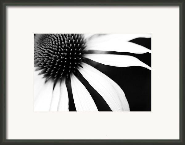 Black And White Flower Maco Framed Print By Copyright Johan Klovsjö