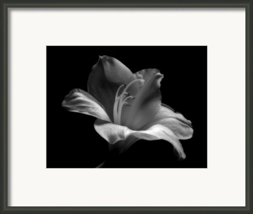 Black And White Lily Framed Print By Artecco Fine Art Photography - Photograph By Nadja Drieling