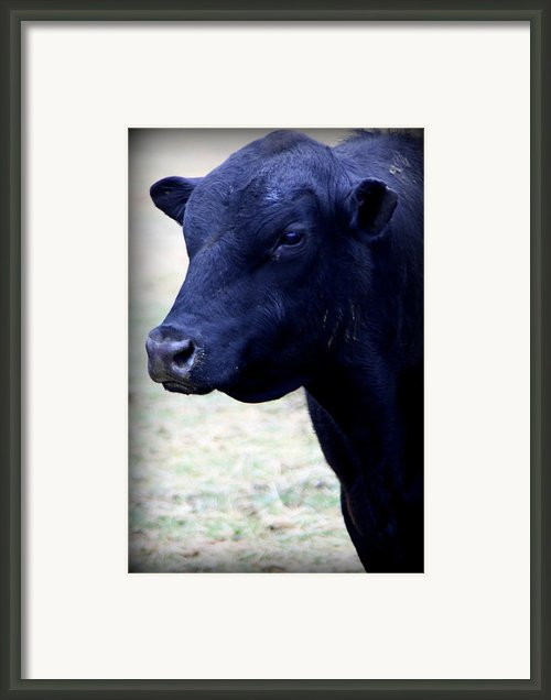 Black Angus Bull - Side Profile Framed Print By Tam Graff